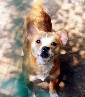 重庆市小动物保护协会