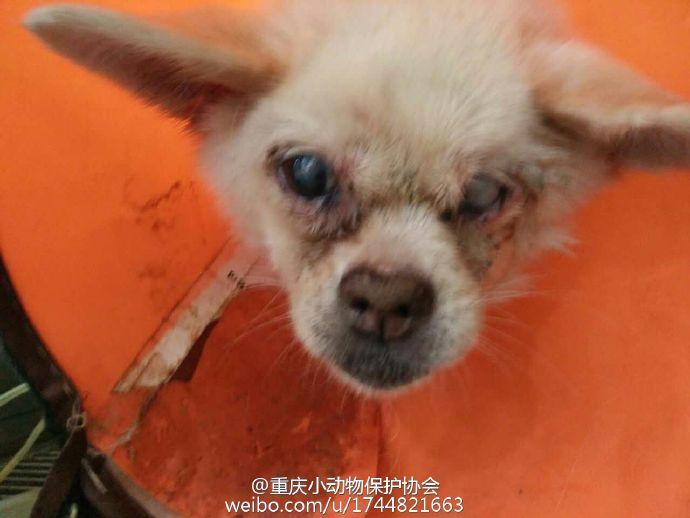 狗狗送到了大学城鸿祥动物医院.经检查狗狗身体情况非常不好.
